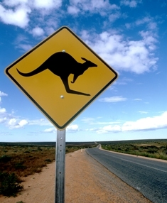 Look for kangaroo signs when you travel in Australia