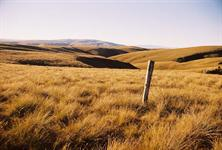 High Country Tussock land - Lake Onslow area