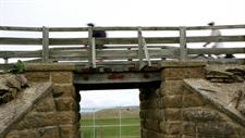 Railway Bridge - Otago Central Rail Trail