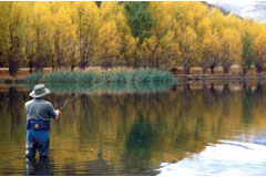 Lake Dunstan is famous for it's Fishing