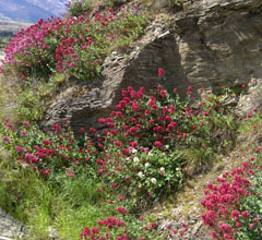 Wildflowers in the Central Otago spring