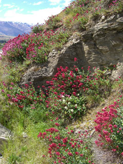 Treasure an enchanting walk amongst nature's wildflower canvas in Central Otago