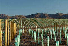 In 2008, the Central Otago District produced around 9,500 tonnes of grapes