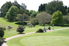 Golf Te Puke course
