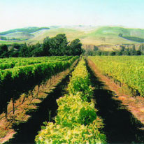 Waipara Vineyards