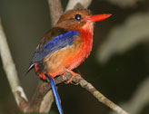 Bird Watching in  New Guinea