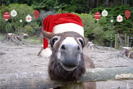 Celebrate Christmas at Staglands Wildlife Park