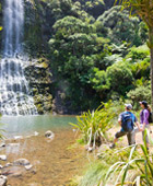 Auckland Tour Full Day All Inclusive Auckland Tours