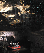 Auckland to Waitomo Caves Private Luxury Tours - New Zealand Shore Excursions from Auckland