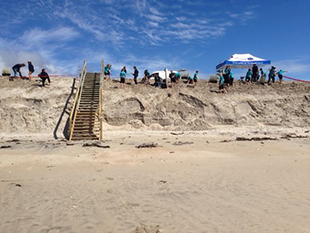Waipu Primary school helping with dune planting