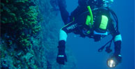 Diving options available at  Whangarei TOP 10 Holiday Park