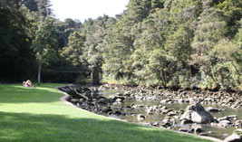 Whangarei Top 10 Holiday Park is situated amidst a scenic native tree reserve