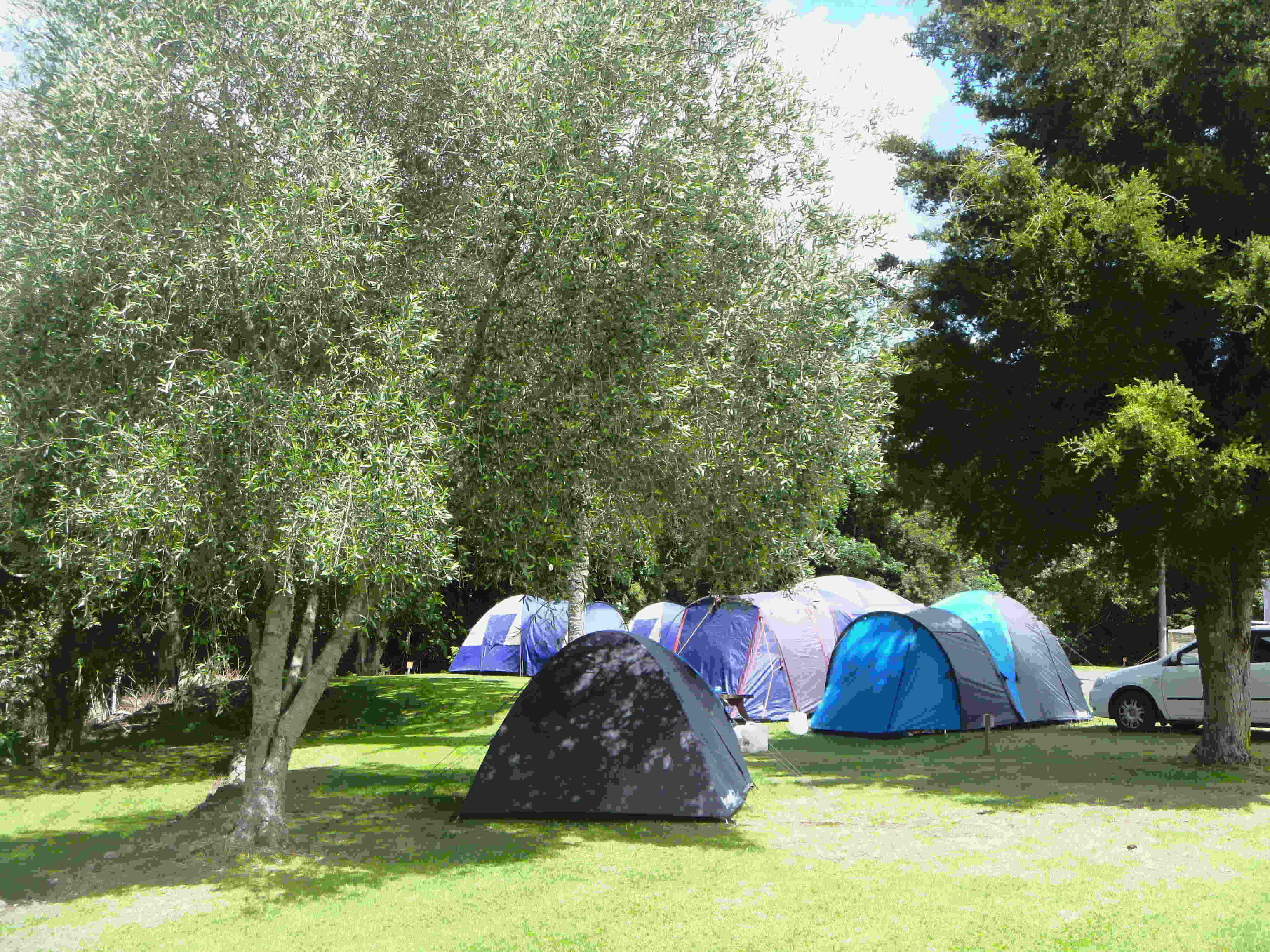 Whangarei TOP 10 Holiday Park tent sites power sites