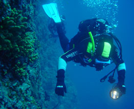 Bay of Plenty's marine environment offers numerous diving opportunities for the keen scuba diver