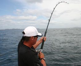 The Bay of Plenty's clean waters are surging with a great variety of fish