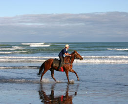 The Bay of Plenty boasts numerous well-established horse trek operators
