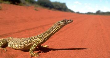 Self Drive Tours of Australia