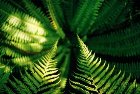 Fascinating nature like giant ferns will await the traveller on New Zealand's North and South Islands