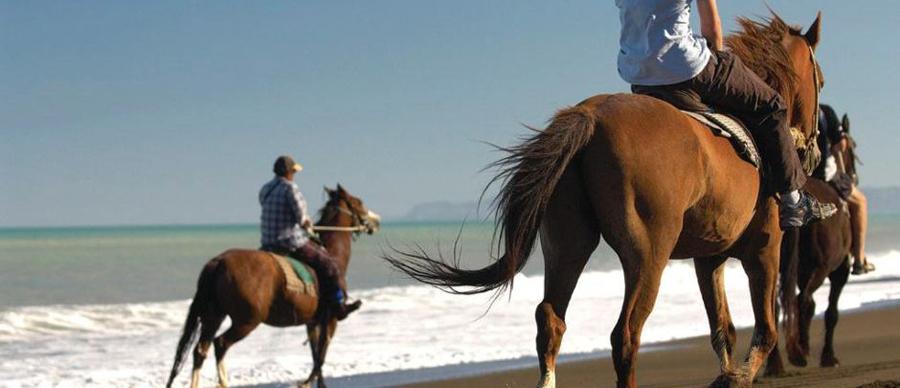 Aroha Luxury Tours - New Zealand adventure tours and holidays - horse riding