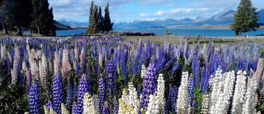 Aroha Luxury Tours - Scenic highlights tour - beautiful flora