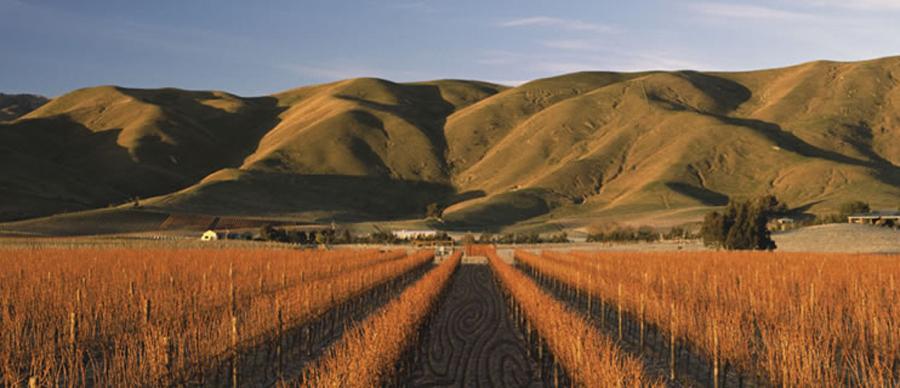 Aroha Luxury Tours - New Zealand Wine Tours - marlbourough wine country