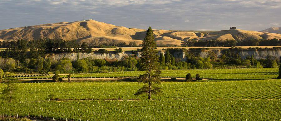 Aroha Luxury Tours - New Zealand Wine Tours - beautiful New Zealand vineyards