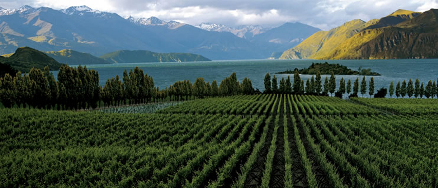 Aroha Luxury Tours - New Zealand Wine Tours - beautiful lakeside vineyards
