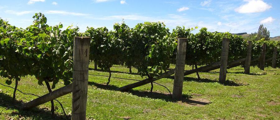 Aroha Luxury Tours - About New Zealand - Vineyard country