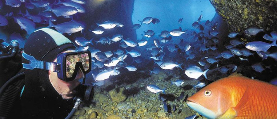 Aroha Luxury Tours - About New Zealand Sports - Diving
