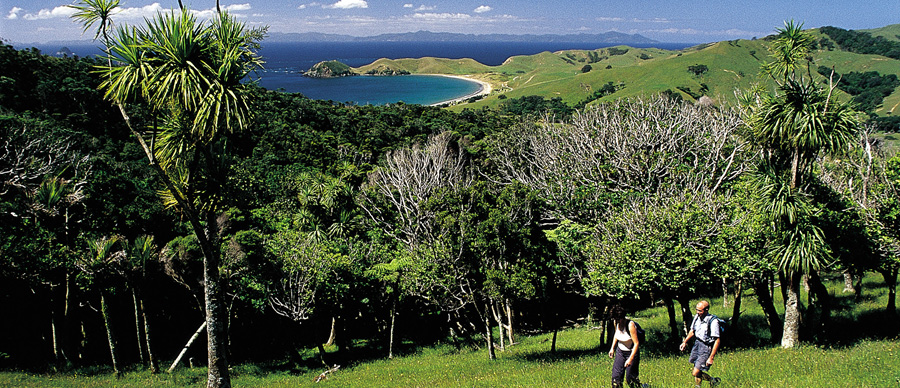 Aroha Luxury Tours - About New Zealand Flora - Native bush