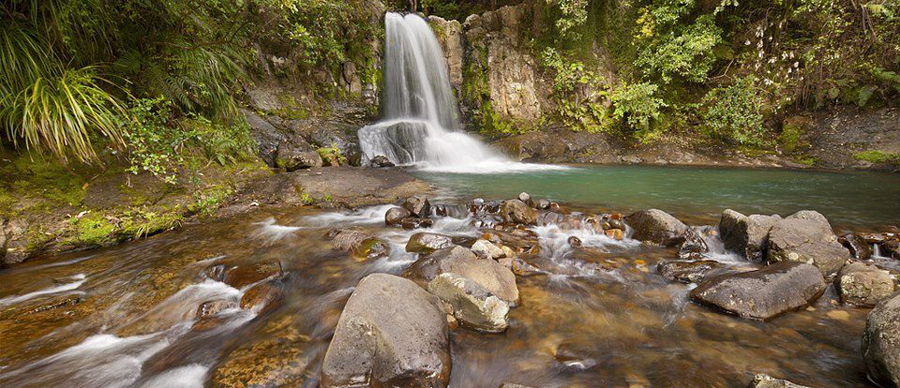 Aroha Luxury Tours - About New Zealand Flora - Waterfall