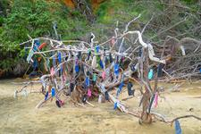 The tree of missing jandals at Big Bay
