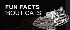 fun facts 'bout cats