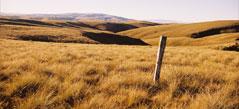 Bullock Track