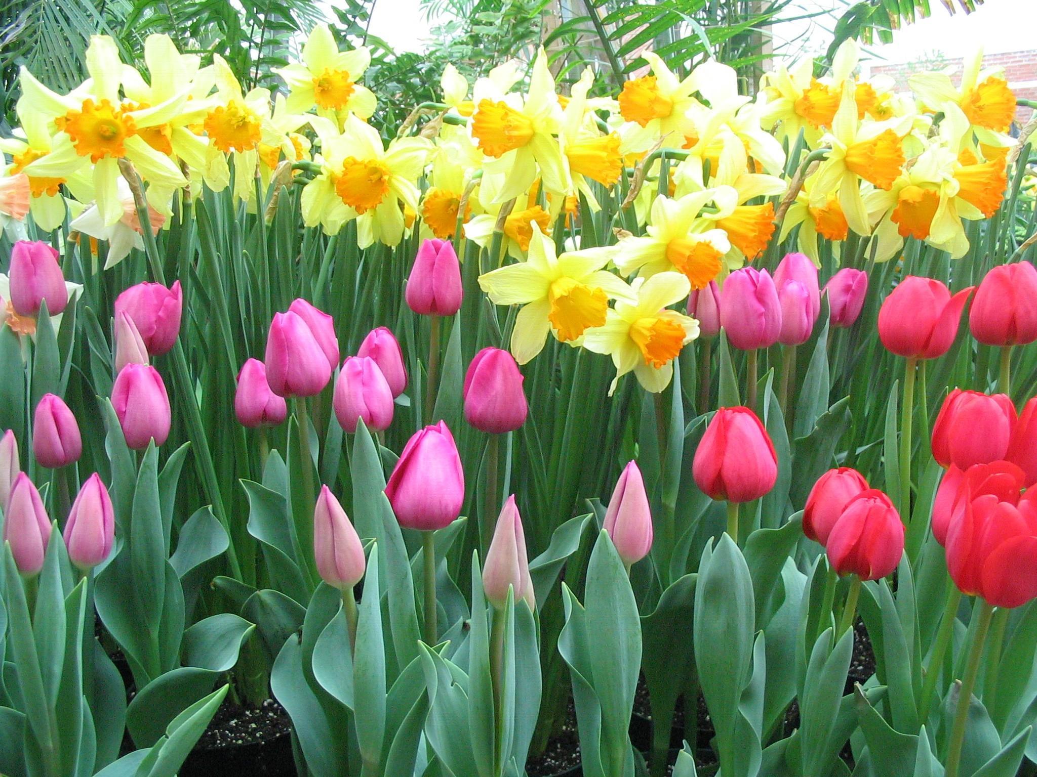 Bethlehem garden centre tauranga flowers bulbs seeds mightylinksfo