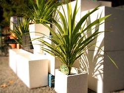 You can hire a range of plants from Decor Gardenworld