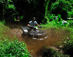 Jungle Quad Adventure