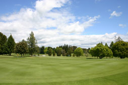 Te Puke Golf course green