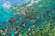Hotel Maitai Bora Bora Environment