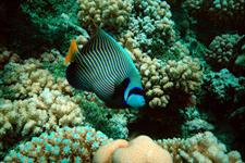 Facinating life in the Coral