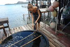 Cultivating Black Pearl Oysters