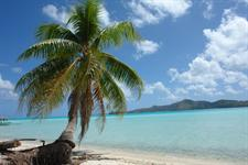 Coconut trees, Beach and the Lagoon