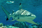 Experience scuba diving and meet underwater marine life including sharks