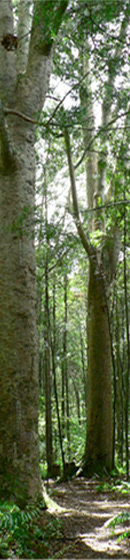Enjoy the trees at Bushmans Reserve, near Matakohe Top 10 Holiday Park