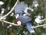 Bird Watching in PNG