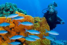 Diving in Papua New Guinea