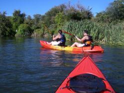 guided rotorua kayak trip