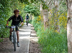 Mountain Bikers cycling through centtenial park