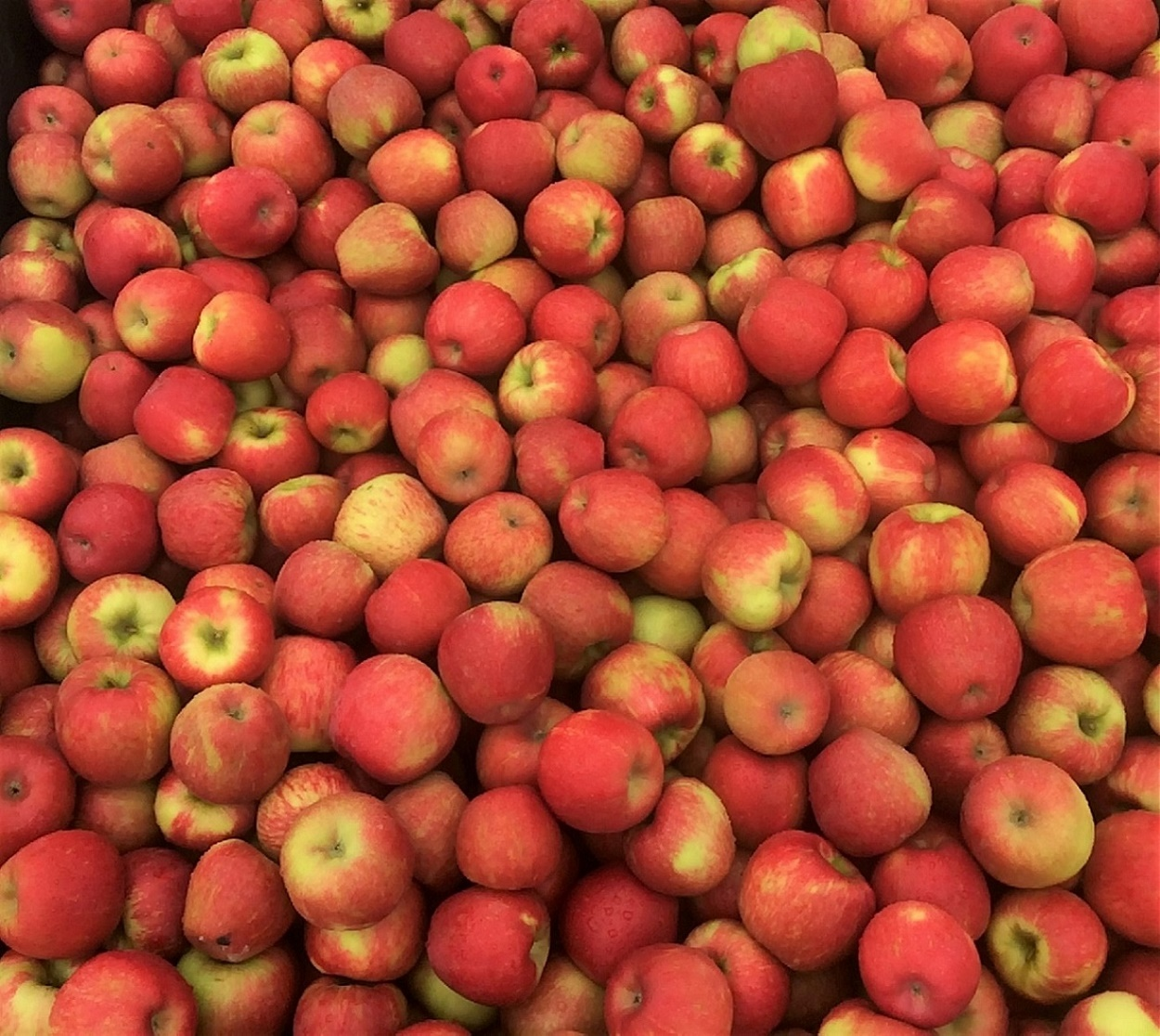 Waipopo Orchards