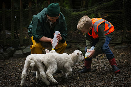 get behind the scenes and help feed the animals